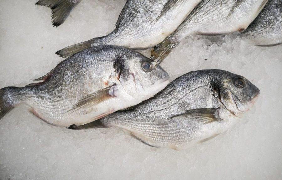 Pescado congelado   PIXABAY